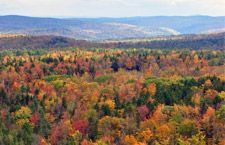 Vermont fall foliage. Wikipedia